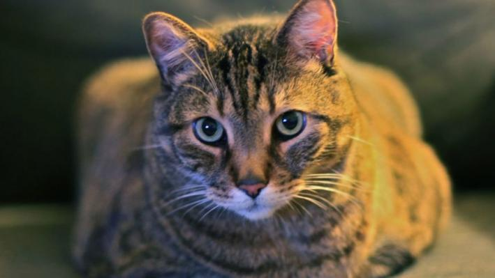 Info Session On Stray Cat Trap Neuter Release Program This